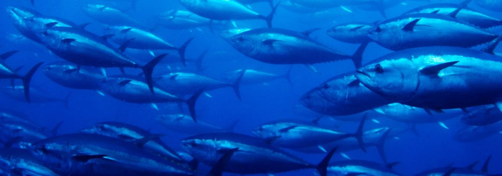 Tuna Fishing Blog